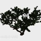 Breitblättriger Gartenbaum