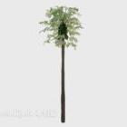 شجرة استوائية عالية