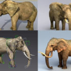 10 Realistic Elephant 3d Models Collection