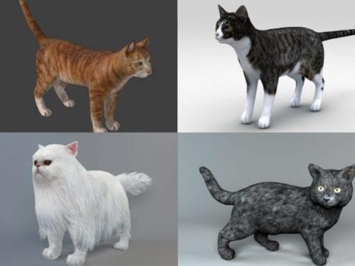 15 Beauty Cat 3D Models Collection