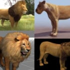 15 Lion 3D Models Collection تحميل مجاني