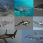15 Realistic Animal Shark 3D Models Collection
