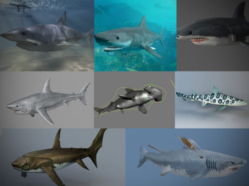 15 realistista Animal Shark 3D -mallistoa