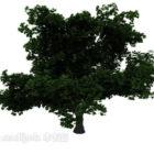 Breitblättriger großer Baum