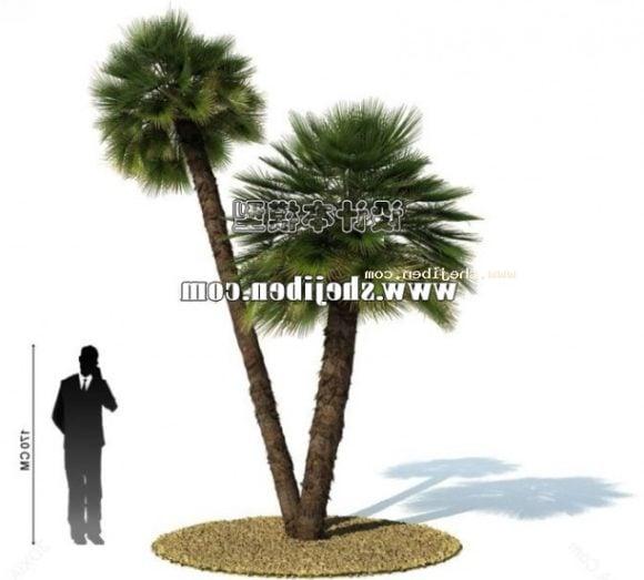 Realistic Asia Palm Tree