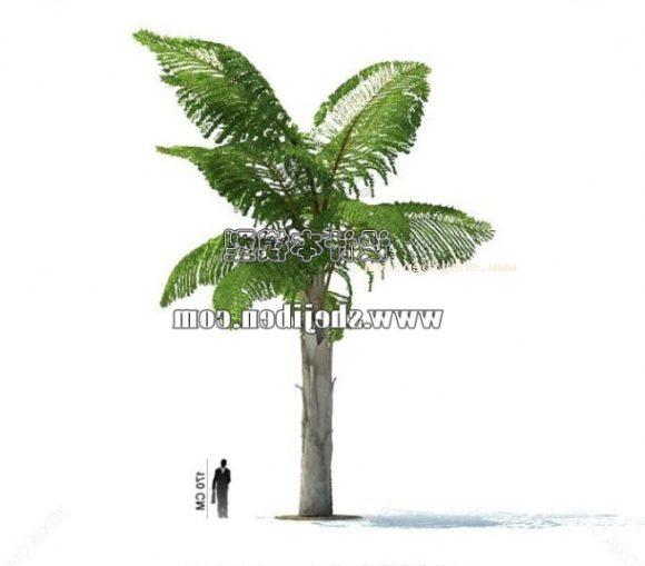 Garden Coconut Tree