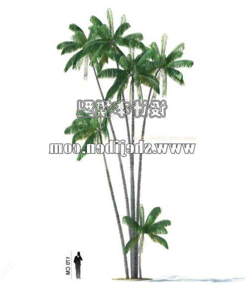 Tropical Coconut Group Trees