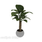 Indoor Bonsai Big Leaf Plant