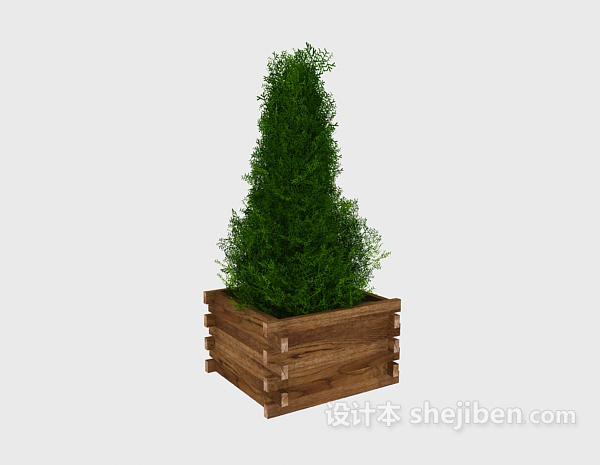 Potted Bonsai Green Plant