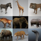 African Animal 3D Models Collection
