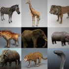 African Animal 3D Modeller Collection