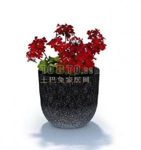 Bonsai Flower Potted