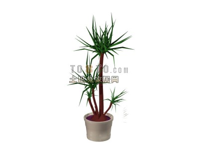 Plant Potted Indoor