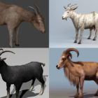Realistic Goat 3D Models Collection