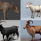 Realistisk ged 3D-modeller