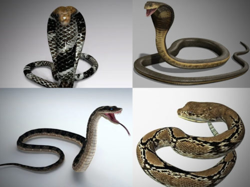 10 realistista Snake 3D -mallistoa