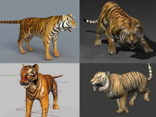 Realistic Tiger 3d Models Collection