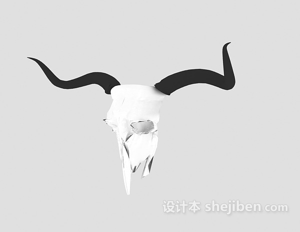 Sheep Head Skull