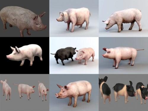 Colección de 10 modelos de cerdo realistas en 3D
