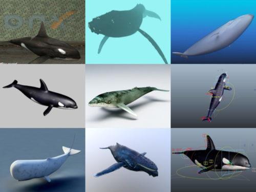 12 مجموعة نماذج ثلاثية الأبعاد خالية من الحيتان الواقعية