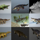 15 Crocodile 3D Models Collection