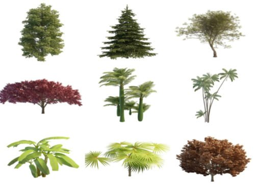 20 Realistic Tree Free 3D Models Collection