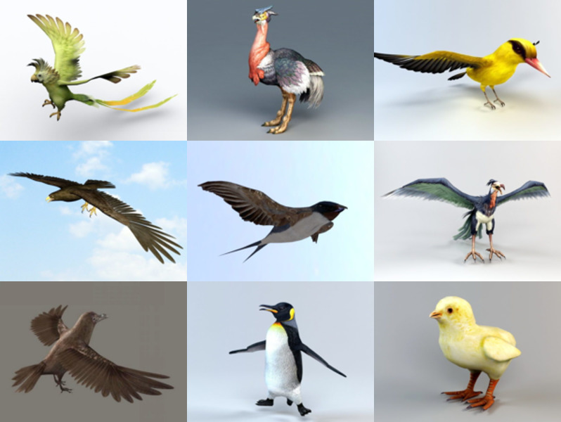10 Bird Animal 3D Models Collection – Week 2020-43
