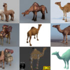 10 Camel 3D Models Collection – Week 2020-44