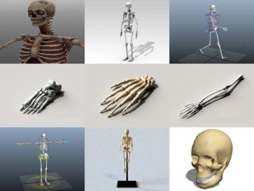 10 نماذج بشرية ثلاثية الأبعاد خالية من الهياكل العظمية - الأسبوع 3-2020