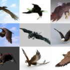 10 Realistic Eagle 3D Models – Week 2020-44