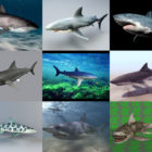10 Realistic Shark 3D Models – Week 2020-44