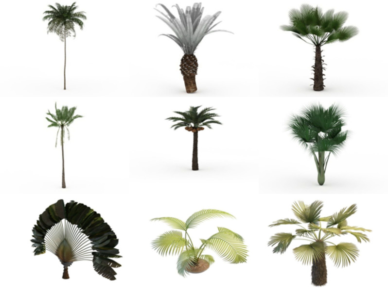 11 3ds Max Palm 3D Models – Day 18 Oct 2020