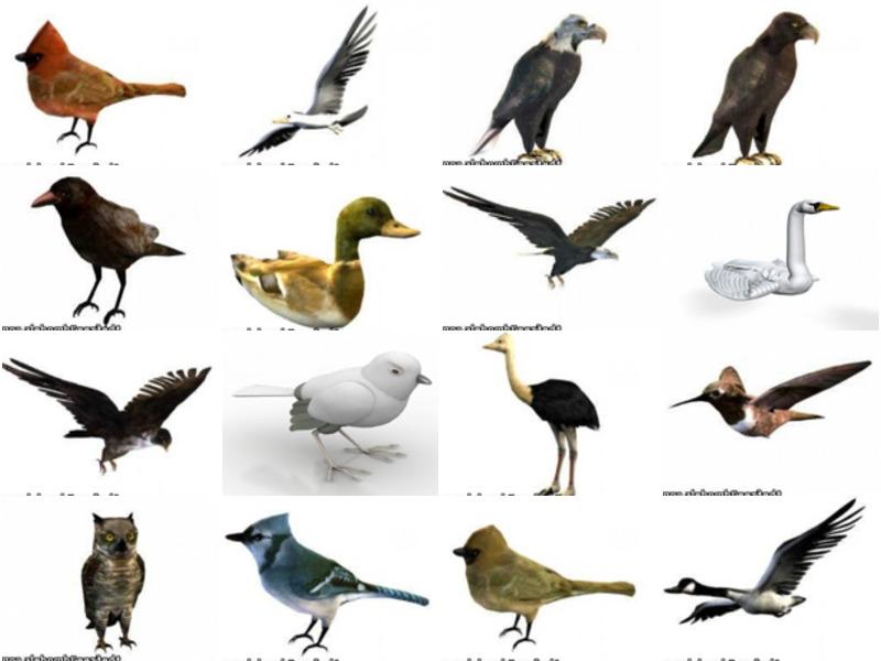 20 Lowpoly Bird Animal 3D Models – Week 2020-43