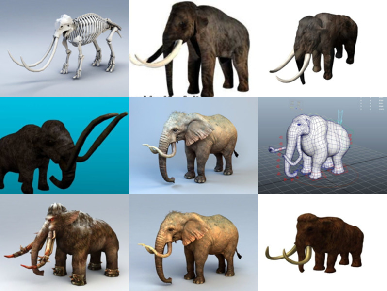 9 Mammoth Animal 3D Models – Week 2020-43