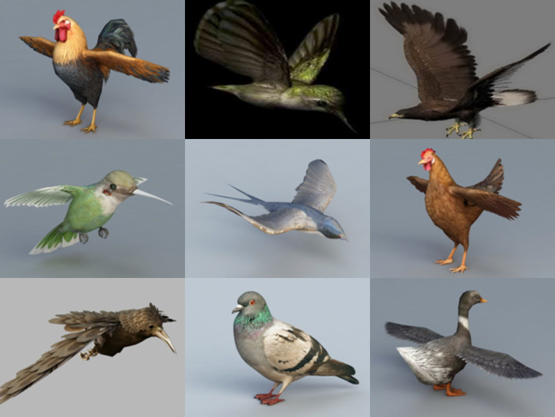 9 Realistic Bird Animal 3D Models – Week 2020-43