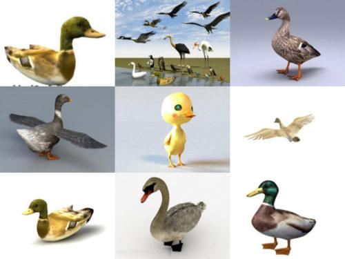 12 parasta eläinankkua ilmaista 3D-mallia