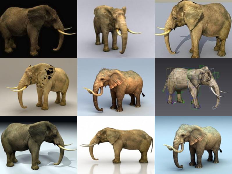 أفضل 9 نماذج واقعية لفيل الحيوانات ثلاثية الأبعاد - الأسبوع 3-2020