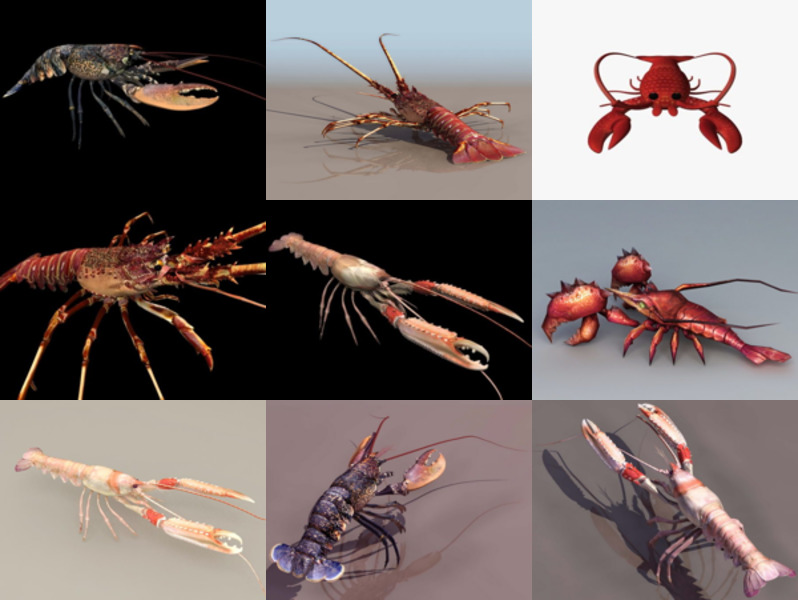 10 Realistic Lobster Free 3D Models Animal Collection