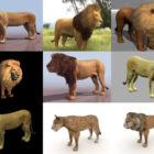 Загрузите 10 реалистичных бесплатных 3D-моделей льва - Высокое качество 3D-лев