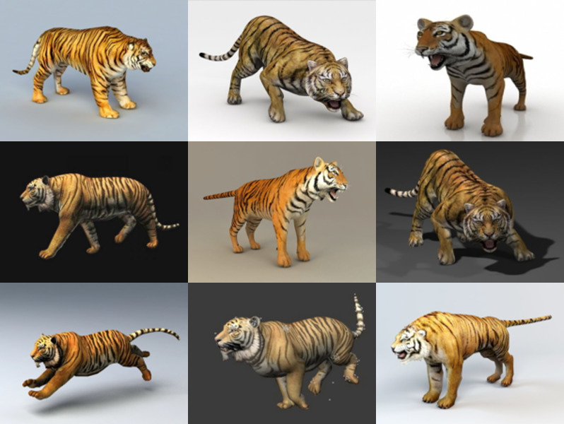 10 Tiger Animal 3D Models for Free Download in Realistic & High Quality Style
