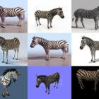 Скачать 10 реалистичных животных-зебр бесплатно 3D-моделей - Высококачественная 3D-зебра-лошадь